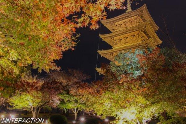 東寺ライトアップ 紅葉