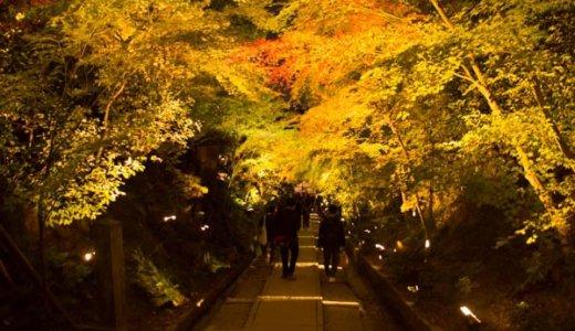 【京都紅葉】名所の高台寺・圓徳院ライトアップに共通チケットで拝観