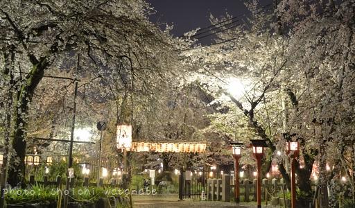京都のおすすめ桜スポットランキングトップ5!