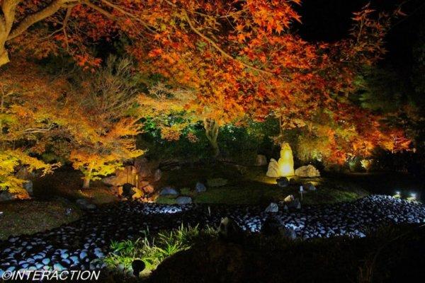 宝厳院のライトアップ 紅葉