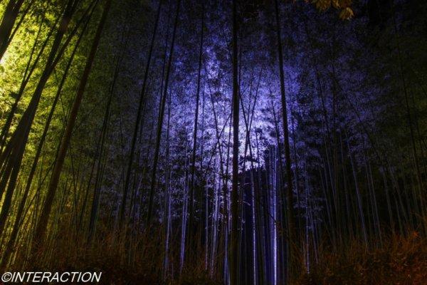 京都嵐山:竹林のライトアップ