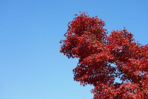 高尾山山頂の紅葉は美しい