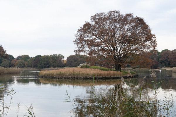 昭和記念公園の池
