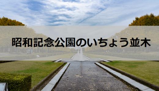 国営昭和記念公園のイチョウ並木はインスタばえスポット間違いなし!