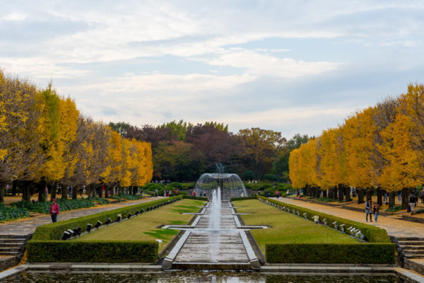 国営昭和記念公園のイチョウ並木と噴水