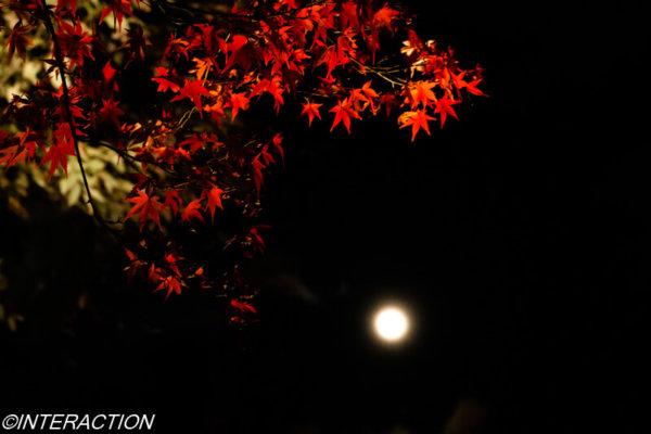 北野天満宮の紅葉とお月さま