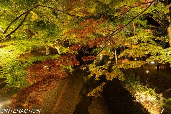 北野天満宮の橋から見た紅葉