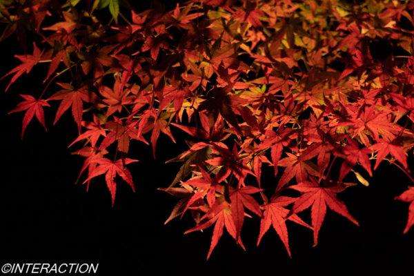 北野天満宮の紅葉は絶景