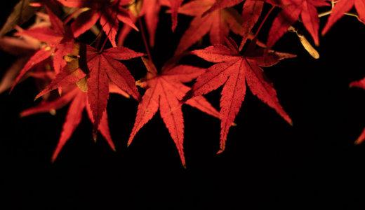 【紅葉】北野天満宮のもみじ苑ライトアップ